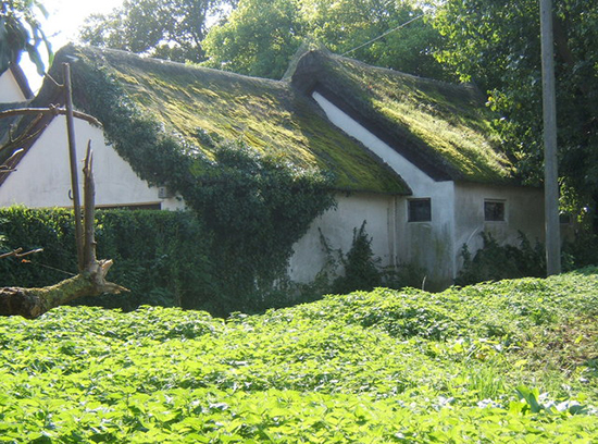 roof moss on house